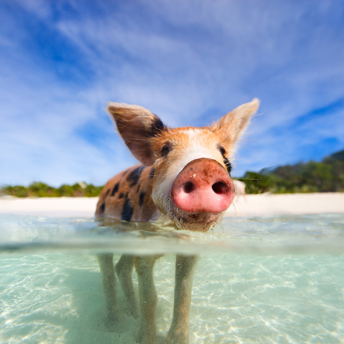 Big Major's Spot (Pig Beach)